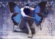 Танцевальное агентство « Dream Dance»