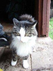 Потерялся кот!!!!!!!!!!!!!!!!!!