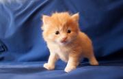 Продается отличный котенок