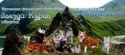 Очаровательные чистопородные котята Курильского бобтейла
