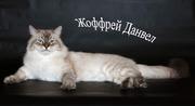 Невские маскарадные сибиряки в Иркутске